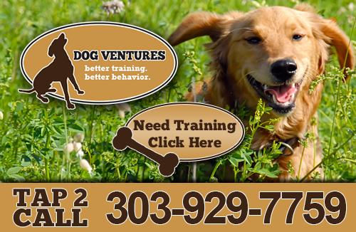 Dog Ventures