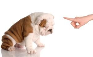 Centennial Dog Training