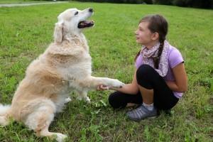 Englewood Dog Training