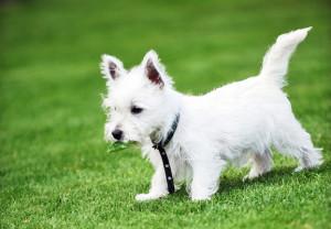 Greenwood Village Dog Training