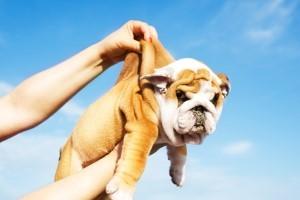 Lakewood Dog Training