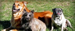 About Denver Dog Training Company